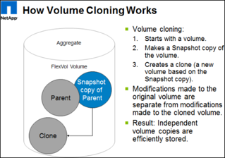 Volume cloning - ONTAP cloud